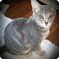 Adopt A Pet :: Deseree - Fairborn, OH