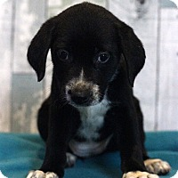 Adopt A Pet :: Daiquiri - Waldorf, MD
