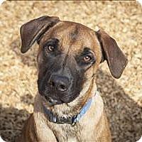 Adopt A Pet :: Rudy - Napa, CA