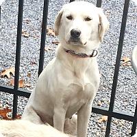 Adopt A Pet :: Frannie - Sagaponack, NY