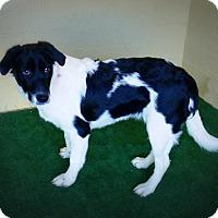Adopt A Pet :: Oneeka - Casa Grande, AZ
