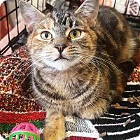 Adopt A Pet :: Odessa - Lafayette, NJ