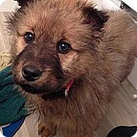Adopt A Pet :: Wrigley - Saskatoon, SK