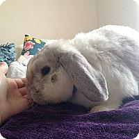 Adopt A Pet :: MoMo - Williston, FL