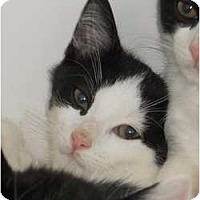 Adopt A Pet :: Patch - Maywood, NJ