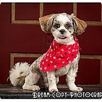 Adopt A Pet :: Scraggles - Owensboro, KY
