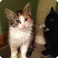 Adopt A Pet :: Ambrosia - East Hanover, NJ