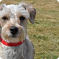 Adopt A Pet :: Buster - Tumwater, WA