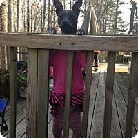 Adopt A Pet :: Nena - Seneca, SC