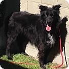 Adopt A Pet :: BB (BUDDY BOY)