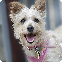 Adopt A Pet :: CeCe-Pending Adoption - Omaha, NE