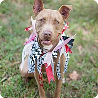 Adopt A Pet :: Sandi - Houston, TX
