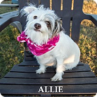 Adopt A Pet :: Allie - Patterson, CA