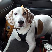 Adopt A Pet :: Blake - Bernardston, MA