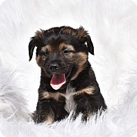 Adopt A Pet :: nevins - Groton, MA