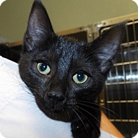 Adopt A Pet :: Calypso - Grants Pass, OR