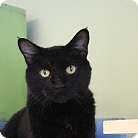 Adopt A Pet :: Wendy - Indianapolis, IN