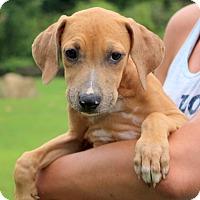 Adopt A Pet :: Demi - Glastonbury, CT
