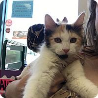 Adopt A Pet :: Queenie - La Quinta, CA