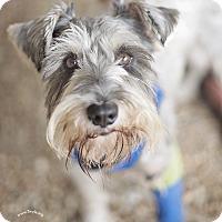 Adopt A Pet :: Lenny - Kingwood, TX