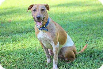 Terrier (Unknown Type, Medium) Mix Dog for adoption in Prince Frederick, Maryland - Lucy