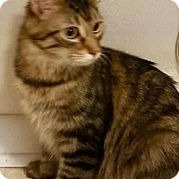 Adopt A Pet :: Seirra - Danbury, CT