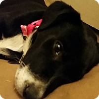 Adopt A Pet :: Lilly - Phoenix, AZ