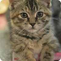 Adopt A Pet :: Lilly - Madison, NJ