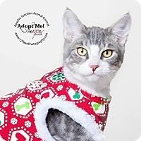Adopt A Pet :: Slick - Apache Junction, AZ