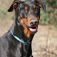 Adopt A Pet :: Leonard - Fillmore, CA