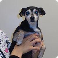 Adopt A Pet :: Dotty - Wildomar, CA