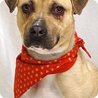 Adopt A Pet :: Martina - Newnan City, GA