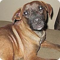 Adopt A Pet :: simon - Cleveland, OH