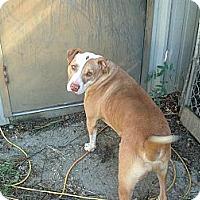 Adopt A Pet :: carlos - Julian, NC