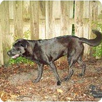 Adopt A Pet :: Binkie - Altmonte Springs, FL