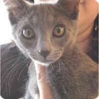 Adopt A Pet :: Smoke - Mesa, AZ