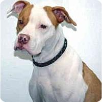 Adopt A Pet :: Aiko - Port Washington, NY