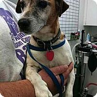 Adopt A Pet :: Charis - Southampton, PA