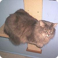 Adopt A Pet :: Glitter - Grand Chain, IL