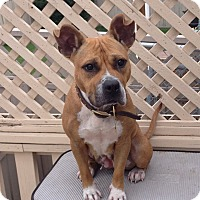 Adopt A Pet :: Katy - Calgary, AB