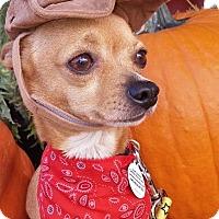 Adopt A Pet :: Ike - Charlotte, NC
