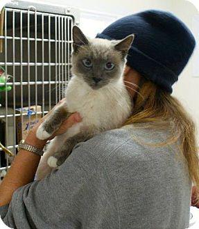 Sphynx Cat Rescue Cincinnati