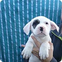Adopt A Pet :: Rocky - Oviedo, FL