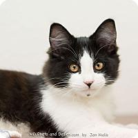 Adopt A Pet :: Copeland - Fountain Hills, AZ