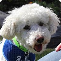 Adopt A Pet :: Carson - La Costa, CA
