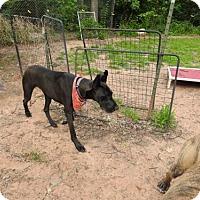 Adopt A Pet :: Juno  09/07/16W - Minneapolis, MN