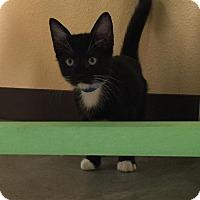 Adopt A Pet :: Lexington - Rockport, TX