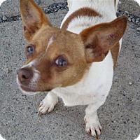 Adopt A Pet :: Gigi - Liberty Center, OH