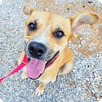 Adopt A Pet :: Ellie - Kingston, TN