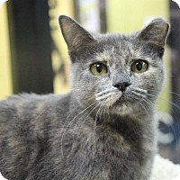 Adopt A Pet :: Miss Kitty - Benbrook, TX